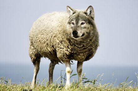 オオカミを夢見る羊